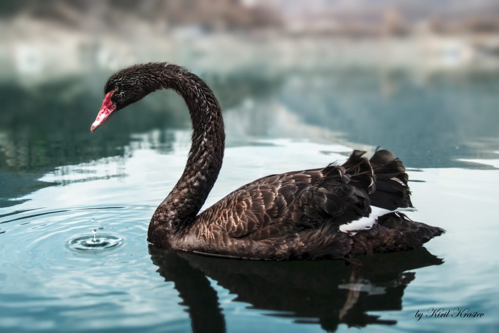 Black Swans, Anti-Fragility And Organizations