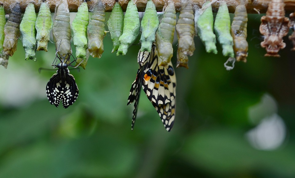 How You Can Help Your Company Transformation: Part Two
